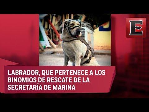 Frida, inolvidable por su labor en el rescate de personas por sismo