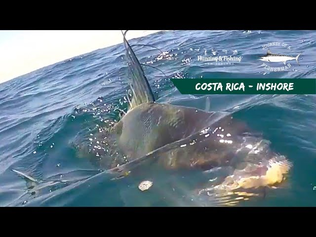 COSTA RICA - INSHORE ROOSTER FISH