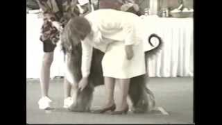 1998 Ahca National Specialty (2/6) - Dog Classes