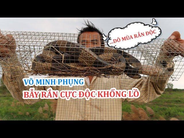 Võ Minh Phụng : Ngất Xĩu Khi Đụng Độ Rắn Cực Độc  Mái Gầm ( Cạp Nong ) Khổng Lồ