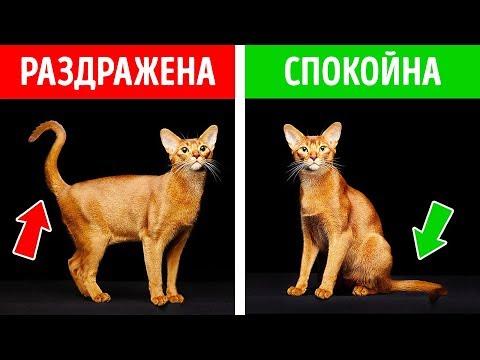 Как понять что хочет кошка