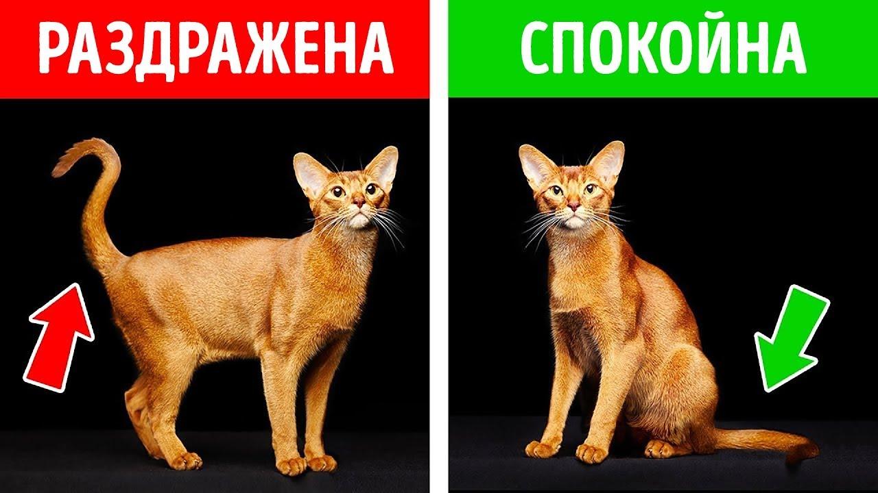 Как Узнать, Что Чувствует Ваша Кошка