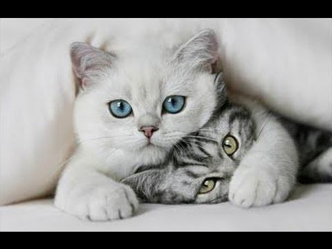 Ringtone - CAT - gato