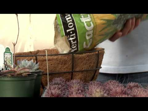Sedum Spheres, Southern Gardening TV, March 2, 2014