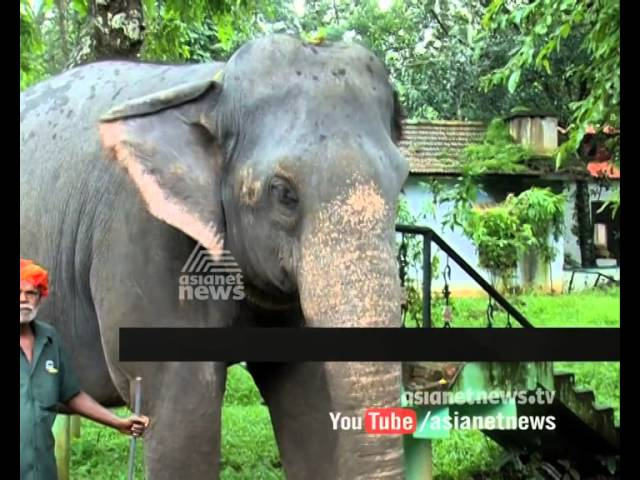 Elephant ride start in Konni Elephant Training Centre : Chuttuvattom News