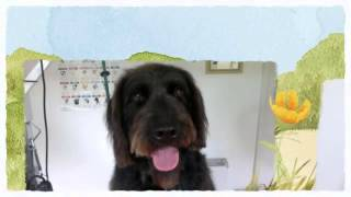 A Dog's Life Dog Grooming And Kennels Birdhill Newport Tipperary Limerick Clare