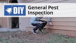 General Pest Inspection