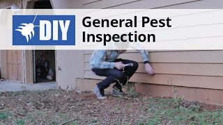 General Pest Inspection