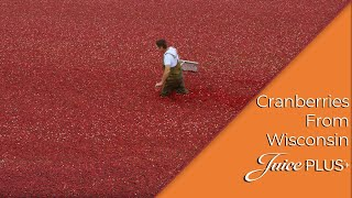 Farm Fresh Nutrition: Cranberries from Wisconsin