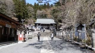 南湖神社の桜は満開で風が強く若干少し花びらが舞っていました。 平日で...