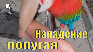 Контактный зоопарк /Зооландия Мурманск/ Нападение попугая Ара