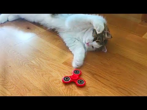 Cats vs Fidget Spinners - Funny Cat Compilation