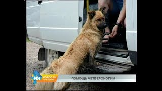 Программы по вакцинации и стерилизации бездомных животных запустят волонтёры в зоне затопления