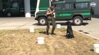 Czworonożni pogranicznicy na lotnisku - szukają m.in. narkotyków i broni