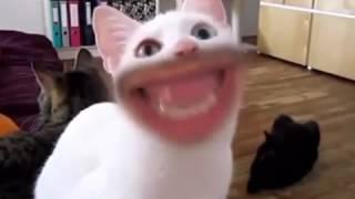 Кошки приколы Кошки разговаривают человеческим ртом