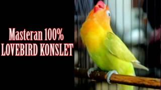 Video Ini Dia Masteran Lovebird Konslet Ngekek Panjang Siap Kontes Tanpa Jeda Paling Joss 2017 download MP3, 3GP, MP4, WEBM, AVI, FLV Oktober 2018