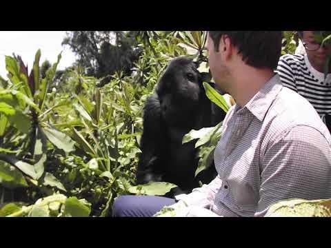 Gorilla trekking Uganda | Gorilla Trekking Rwanda | +256756200001