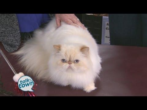 Cat Fanciers Show Preview