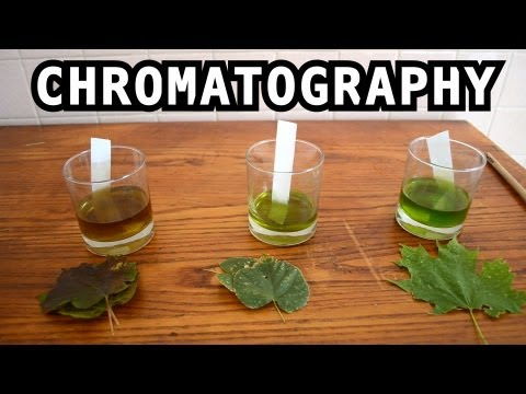 Leaf Color Chromatography - Bite Sci-zed