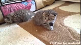 Продажа котик и кошечка