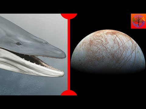 New Prehistoric Whale & Possibility of Life on Europa - 7 Days of Science