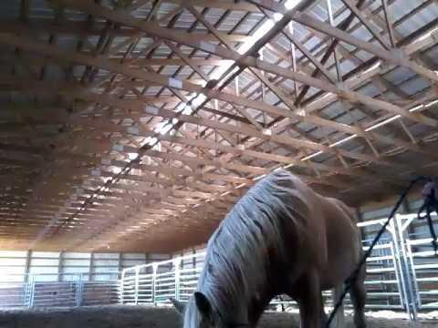 Conscious Horse Conscious Rider with Armina Bridgeman Harris, Saskatchewan June 3-4 2017 Pockets
