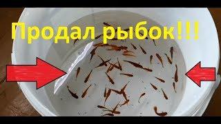 Продал аквариумных рыбок!