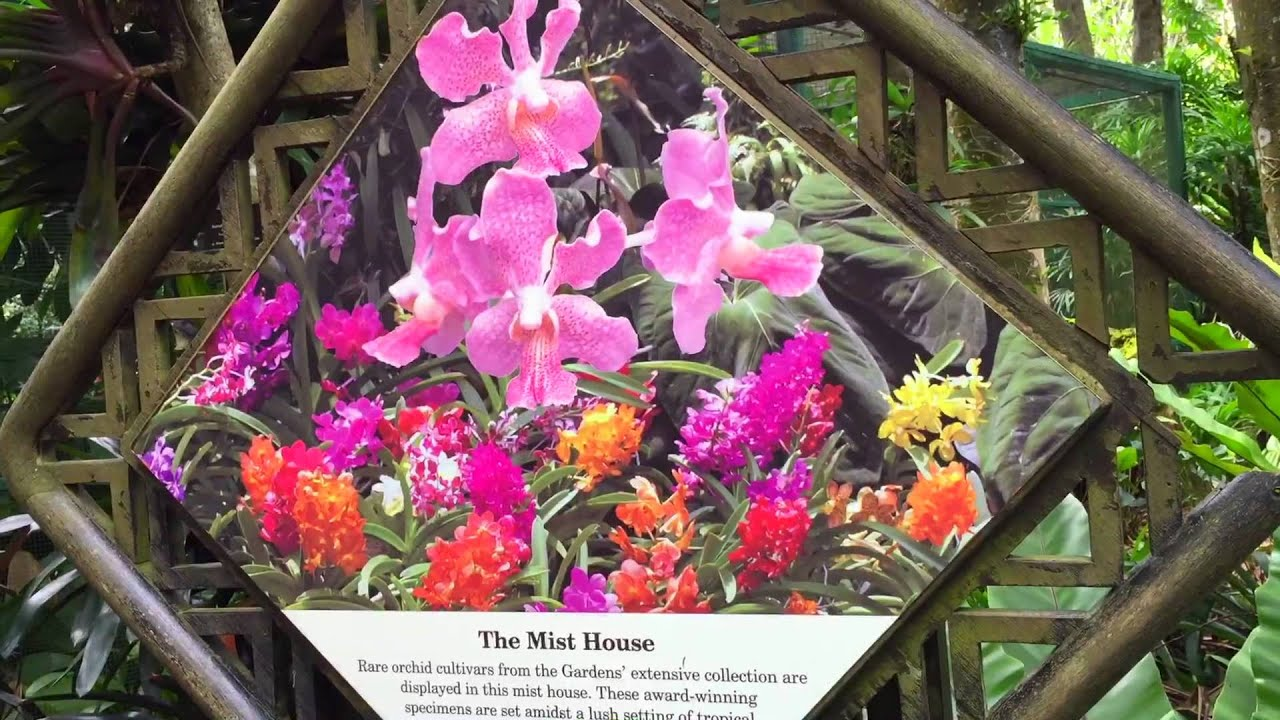 National Orchid Garden Singapore   Botanic Gardens   YouTube