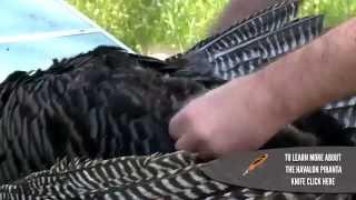 How To Clean A Wild Turkey