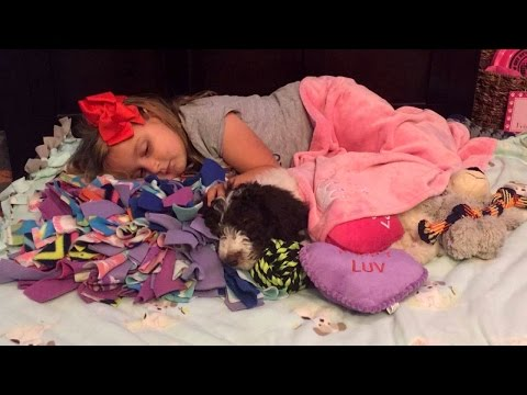 Thumbnail: 5-Year-Old Girl With Arthritis Gets Donated Dog To Help Her Walk