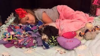 5-Year-Old Girl With Arthritis Gets Donated Dog To Help Her Walk thumbnail