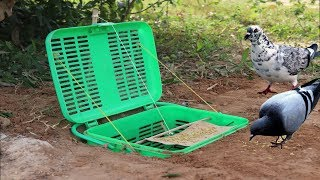 Best Bird Trap Technology Make from Plastic Basket - Very easy bird trap