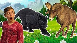 СИМУЛЯТОР ДИКОЙ КОШКИ виртуальный питомец пантера развлекательная игра для детей на GAMES FACTORY