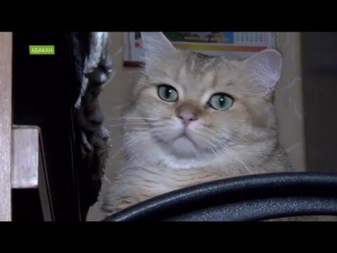 День кошек: какие лучше породистые или дворовые