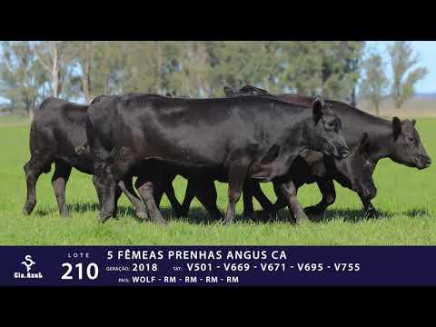 LOTE 210 - TAT V501 V 669 V671 V695 V755