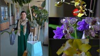Новые орхидеи с выставки / Обзор старенького Март 2016