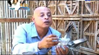 اخر النهار = محمود سعد   احمد ادم تربية الحمام متعة واسرار