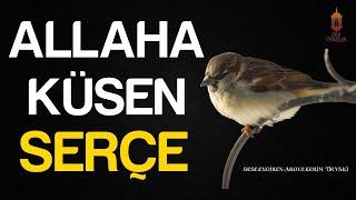 ALLAH'A KÜSEN SERÇE İbretlik Muhteşem Öykü