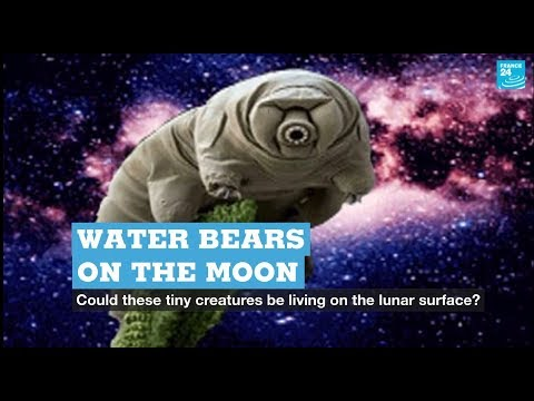 Water Bears On The Moon?