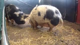 Kinderboerderij dieren - Een half uur lang