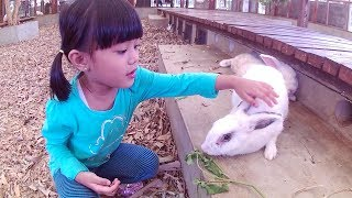 Memberi Makan Binatang di Kuntum Farmfield Bogor Bersama AIRRIU EDUVENTURE