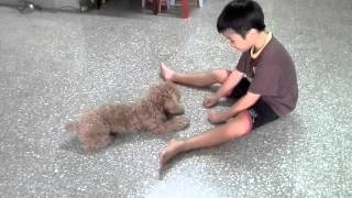 Bling & Ian ~ Kid Play Game With Toy Poodle