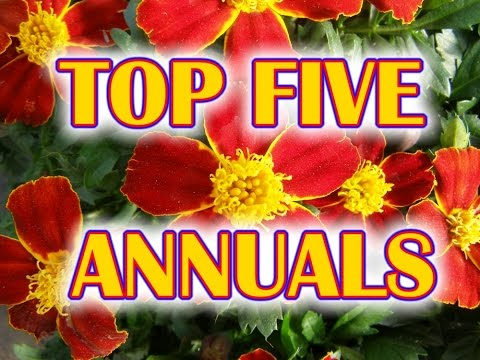 TOP 5 ANNUAL FLOWERS To Plant in Your Garden | Gardening Plants in Soil