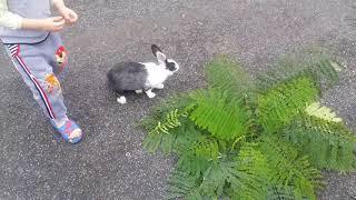 Thỏ nuôi cảnh định chạy trốn không thành