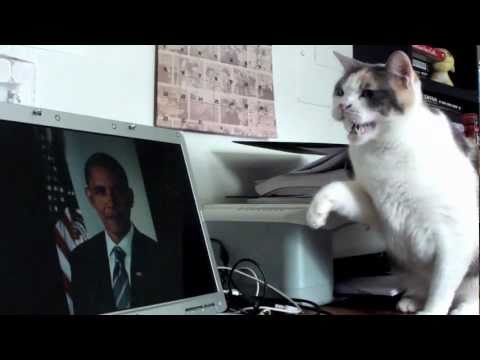 Cat's least favorite president