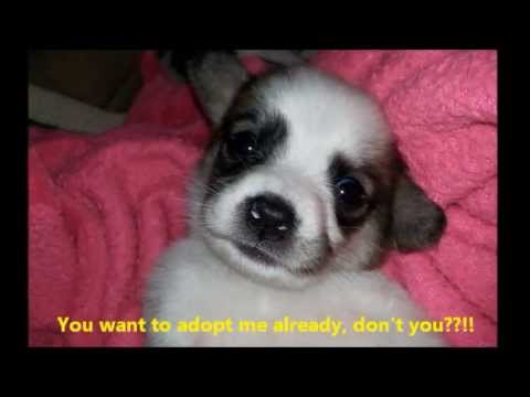 Colorado Puppy Rescue 536 Youtube