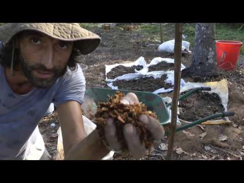 Terra Preta - How to make the best Organic Gardening soil on the Planet?