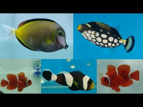 Marine Fish Types at MBDB Ocean in the Cube Aquarium Fish Store