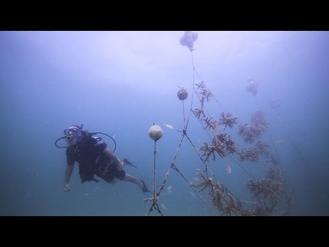 A Breakthrough for Coral Reef Restoration