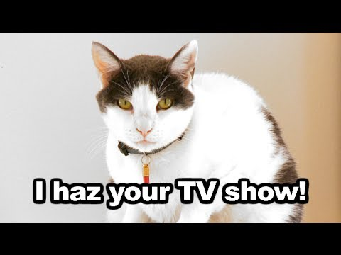 TV's First Internet Cat Reality Show